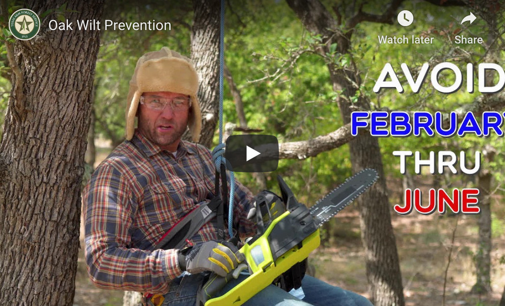 Oak Wilt Prevention