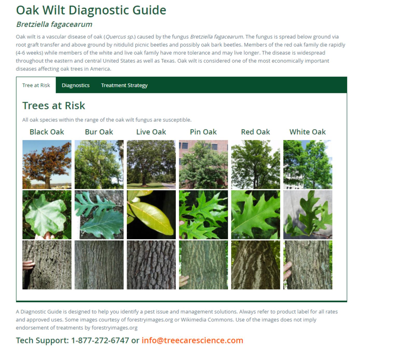 Oak Wilt Diagnostic Guide Rainbow Tree Care