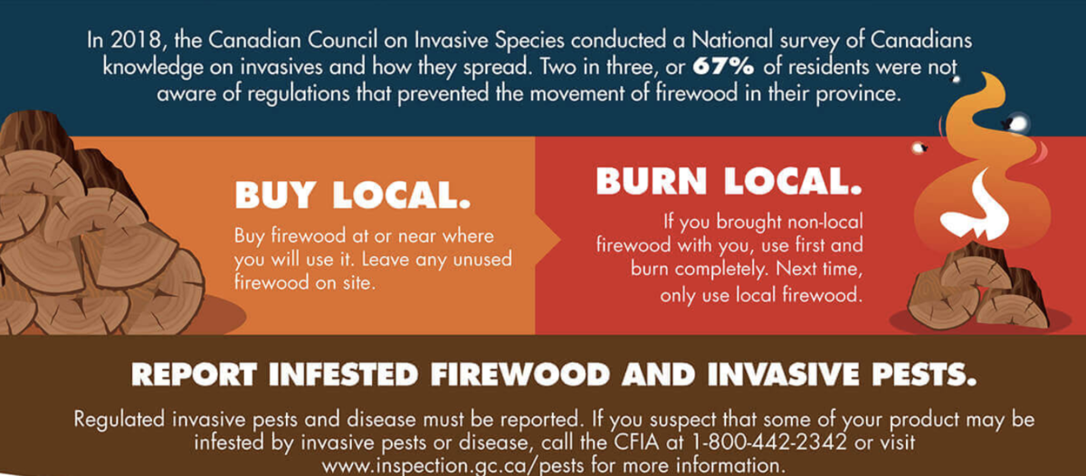 Infested Firewood and Invasive Pests