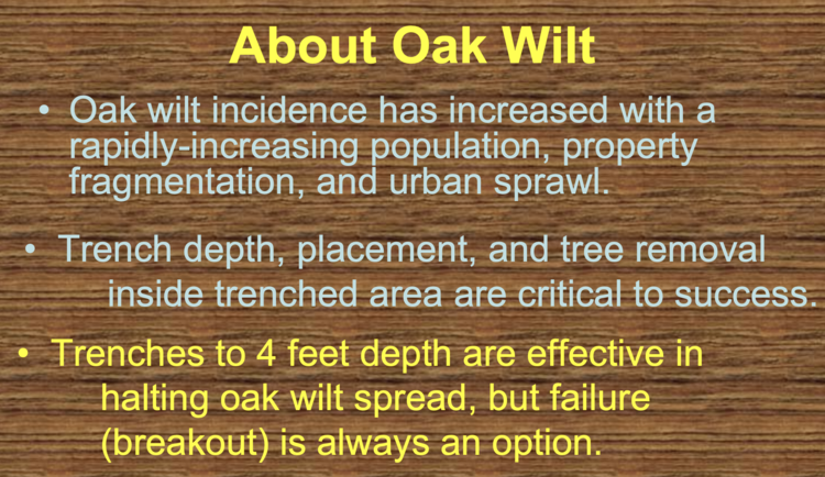 About Oak Wilt - Trenches
