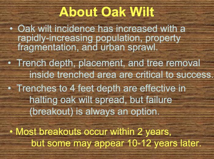 About Oak Wilt - Breakouts
