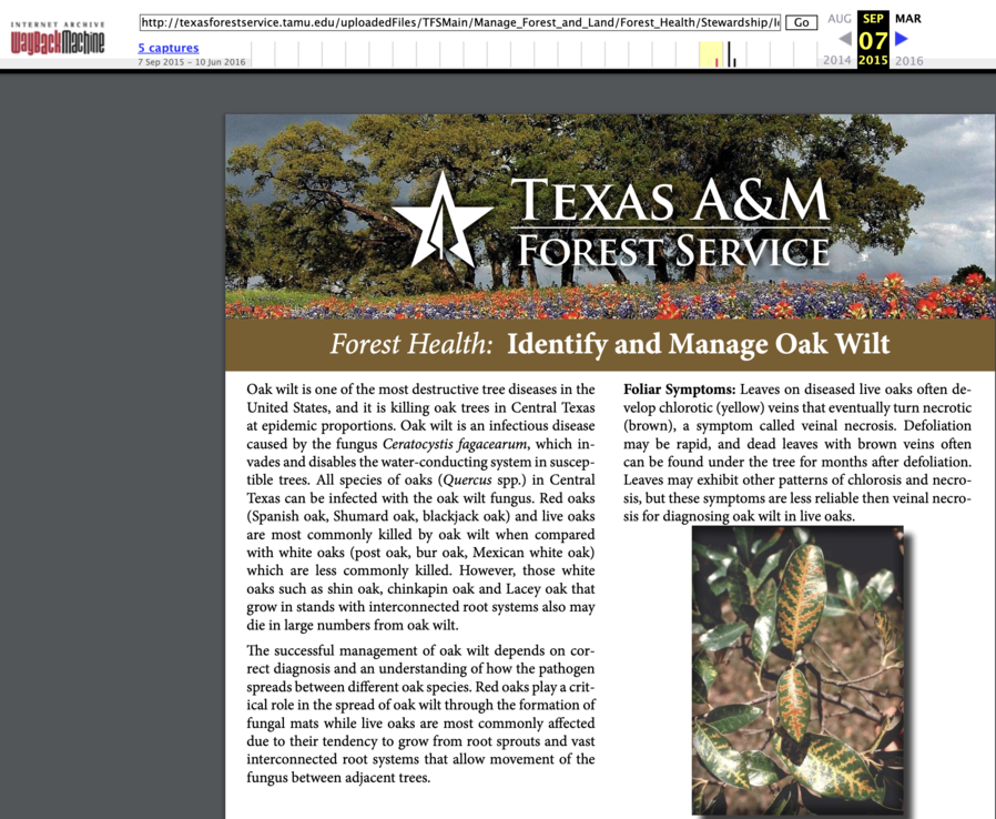 Texas A and M Forest Service