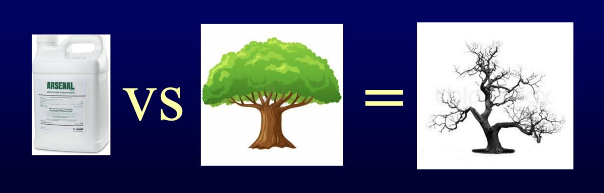 arsenal versus oak wilt