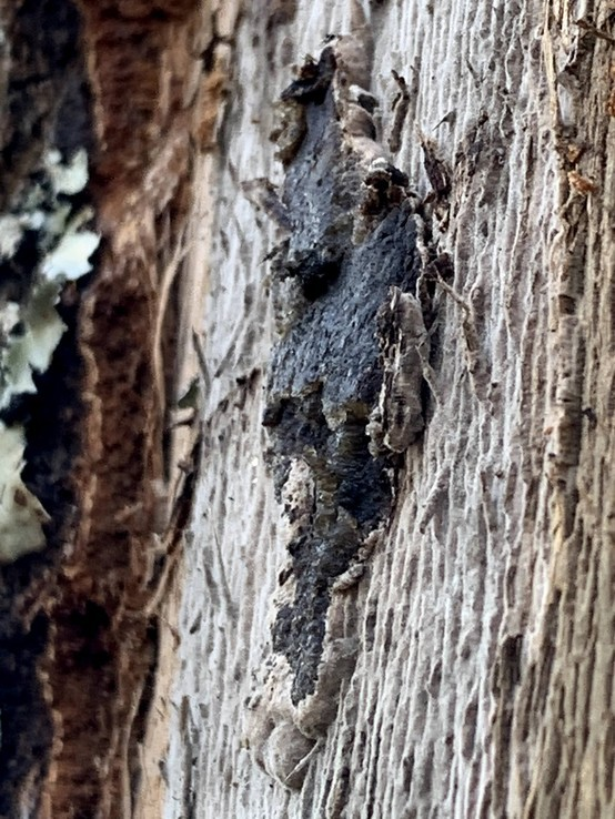 Spring Fungal Mat
