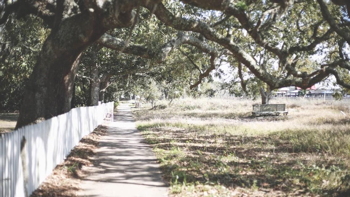 Prune Oak Tree