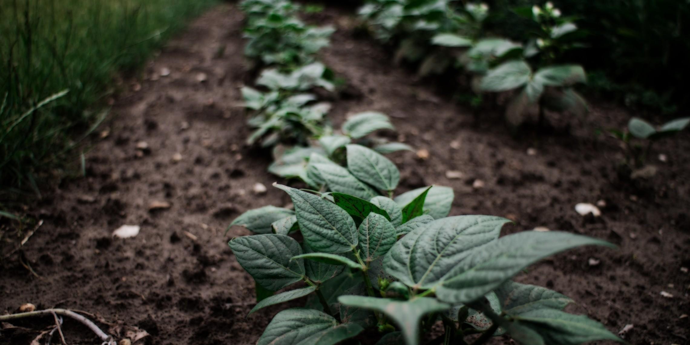 Soil image